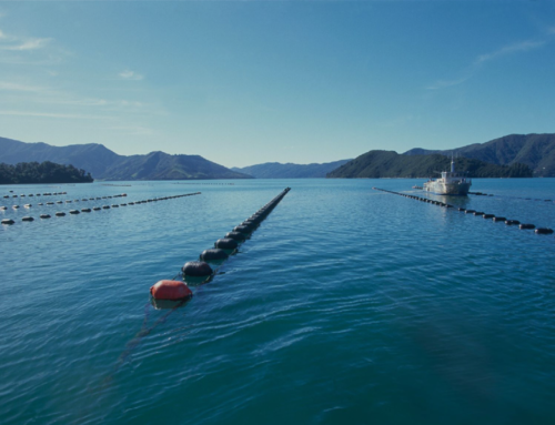 Consultation open on options to improve processes for allocating aquaculture settlement assets to Iwi