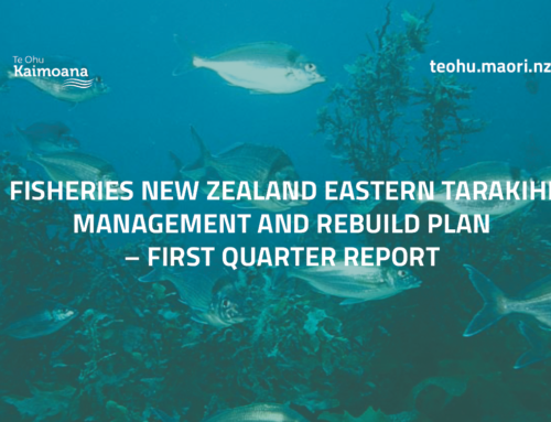Eastern Tarakihi Management Strategy and Rebuild Plan – First Quarter Report