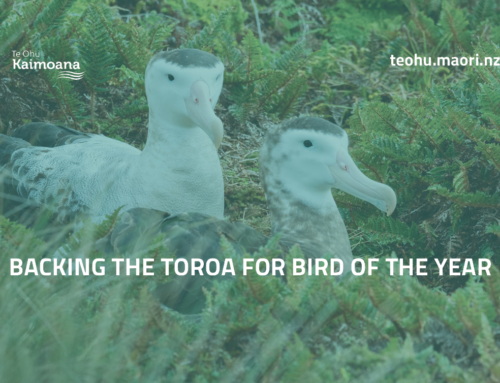 Backing the toroa for bird of the year