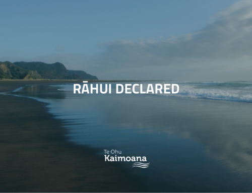 Rāhui in place to protect scallop beds